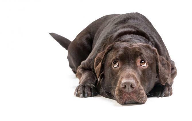 Will Dog Urine Harm My Rope?
